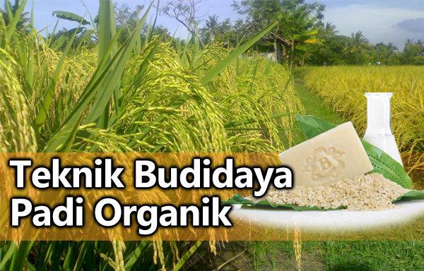 padi-organik-nasa-fileminimizer
